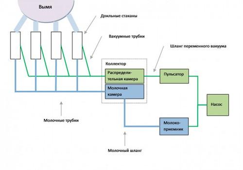Особенности строения доильного аппарата для коз