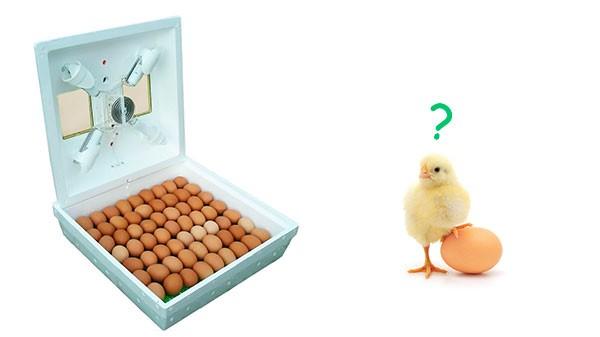 Сколько стоит инкубатор для яиц?