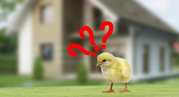 Як правильно вибрати інкубатор для будинку?