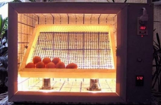 Как работает инкубатор