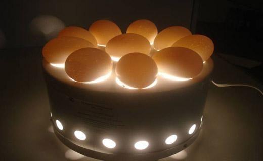 Перевірка цілісності яєць